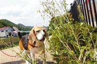 犬【家族】とお散歩コース