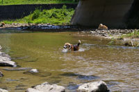 犬【家族】 水遊び
