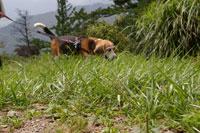 犬【家族】とおでかけ 兵庫県