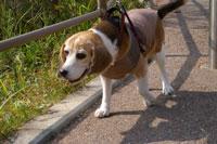 犬とおでかけ関西 大阪 ドッグカフェ
