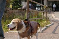 犬とおでかけ 関西 ドッグカフェ