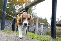 犬のお散歩コース