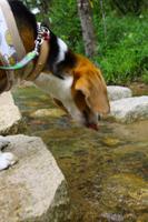 犬とおでかけ 兵庫県