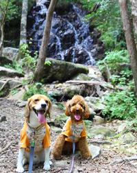 犬とおでかけ 水遊び