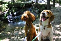 犬とお散歩コース 水遊び