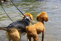 犬と川遊び 関西