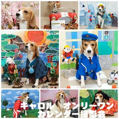 犬の撮影会