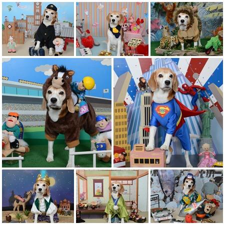 犬 撮影会 年賀状 クリスマス