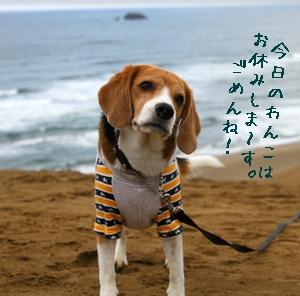 2012年11月22日 虎太郎より